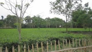 Tea Garden I Thakurgaon I Bangladesh