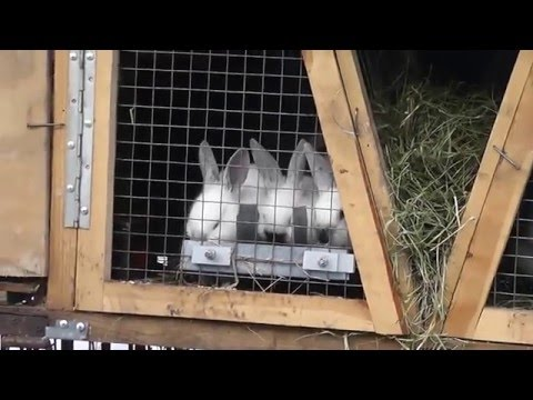 Кормушки для кроликов ютуб