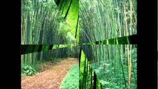 a Lição do bambú CHINES