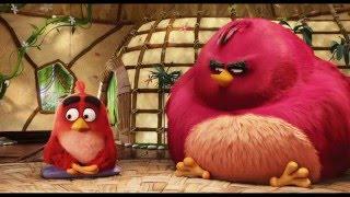 The Angry Birds Movie Film Clip -
