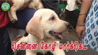 சென்னை கோழி மார்க்கெட் டீஸர்   Pet market chennai   Only on sunday   Parrys Mannadi   Koli market