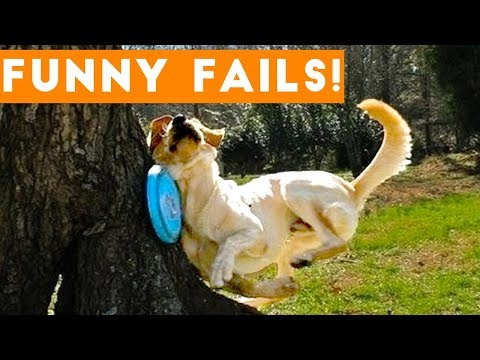 Xxx Mp4 TRY NOT To LAUGH Animals FUNNY PET FAILS Compilation 2018 Epic Pet Videos Moments 3gp Sex