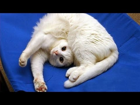 Funny CATS will always make you laugh Funny cat compilation