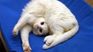 Funny CATS will always make you laugh - Funny cat compilation