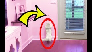 PRANKING CLOUD WITH A LASER POINTER!!!