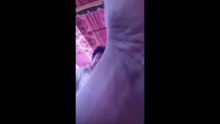 Hot Bicitra Dance   Hot Jatra Dance