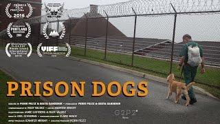 Prison Dogs - Trailer