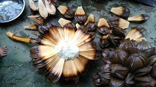 Về miền Tây chẻ Dừa Nước ăn chơi
