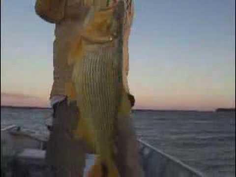 Ayrton pesca Programa de pesca Dourado Veja mais videospesca .br