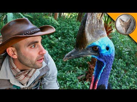 Man vs Cassowary