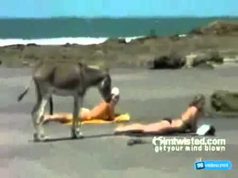 Xxx Mp4 Donkey Funny Momentswith Girls Excited Donkey 2013 HD 3gp Sex