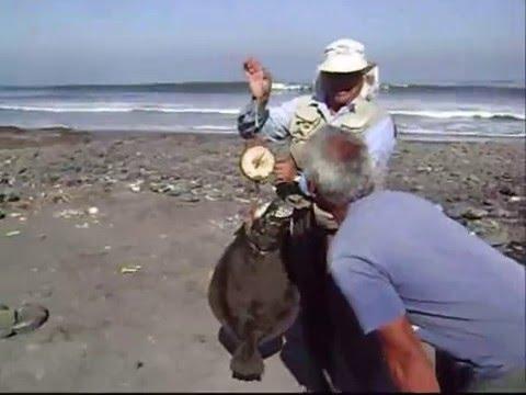 Pesca del Lenguado 11 Kilos