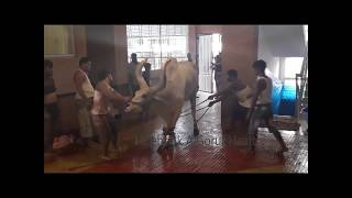 Kenkraj Exclusive Qurbani Video 2017 Dhaka
