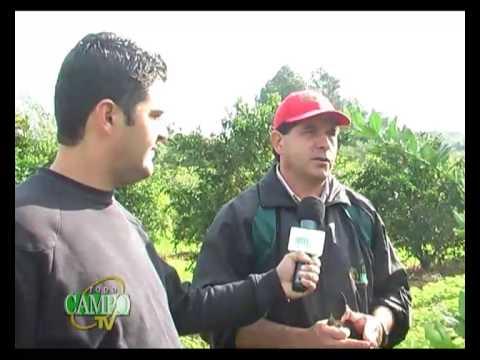 Época de podas en la fruticultura