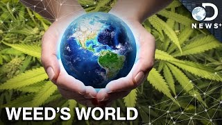 What Would A World With Legal Pot Look Like?