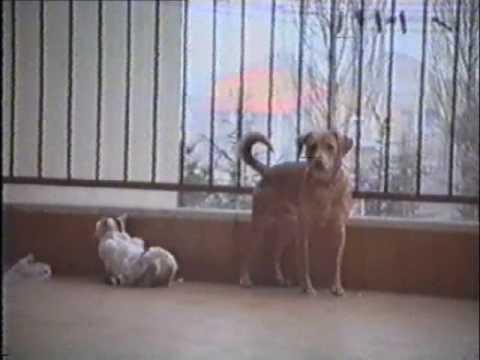 Xxx Mp4 Love Between Cat And Dog Show Sex Il Mio Cane Dog Scopa Con La Gatta My Dog 3gp Sex