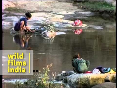 Xxx Mp4 Maldhari Women Doing Manual Laundry On River Side 3gp Sex