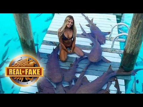GIRL WITH PET SHARKS - Real or Fake?