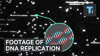 First ever close-up footage of DNA replication will have experts rewriting science textbooks