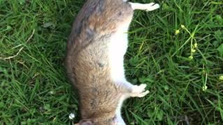 Ratten im Garten- Bekämpfung