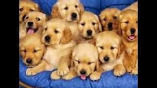 Mi presentación de diapositivas. Animales domésticos.