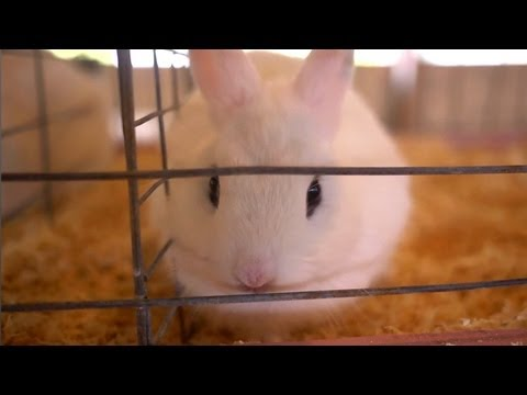 Tommy's Dwarf Hotot Rabbit | Farm Raised With P. Allen Smith