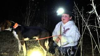 Coon hunting with walker coon hounds