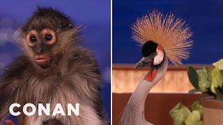 Animal Expert David Mizejewski: Spider Monkey & African Crowned Crane  - CONAN on TBS