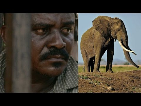 Xxx Mp4 Elephant Poachers The Devil And Ivory Queen Busted In Tanzania 3gp Sex