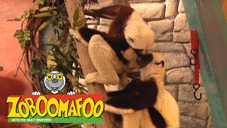 Zoboomafoo 105 - Happy Lemur Day (Full Episode)