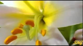 Der Frühling kommt ... The winter passes,The spring comes