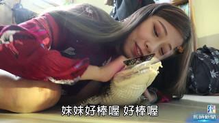 【壹週刊】鱷魚便便長醬!正妹直播為寵物發聲