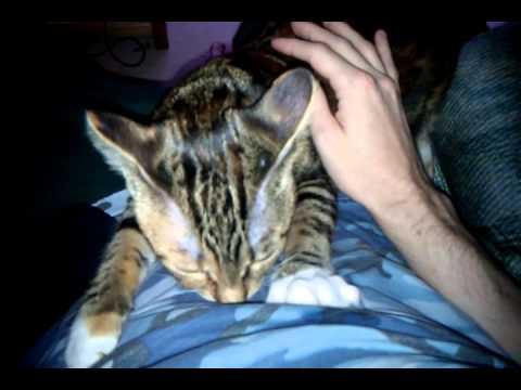 My cat Lita suckling on my tummy