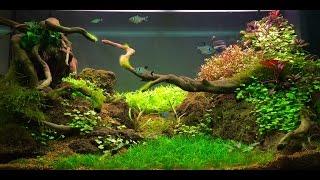 Allestimento/Layout  _ Juwel Rio 125_  by Aquarium Life