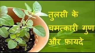 तुलसी के चमत्कारी गुण और फ़ायदे | Health Benefits of Tulsi (Indian Holy Basil)| Health tips in Hindi