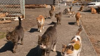 Cats take over Japanese island