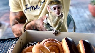 Baby monkey stuffs face at Donut shop!