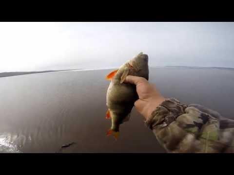 секреты донный ловли рыбы