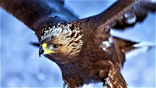 20 Largest Birds of Prey