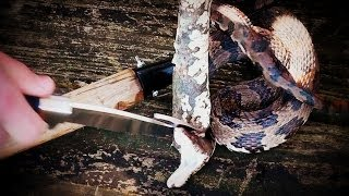 [GRAPHIC] How to Kill and Eat a Snake
