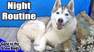 My Dog's Night Routine | Huskies Night Routine 2018