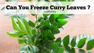 How To Freeze Curry Leaves - Can You Freeze Curry Leaves ? | Skinny Recipes Kitchen Tips