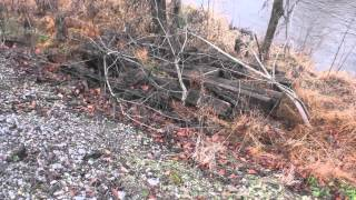 The Fugitive Train Wreck Remains - LEFT TO ROT