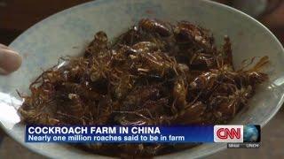 Cockroach farmer makes big bucks on bugs