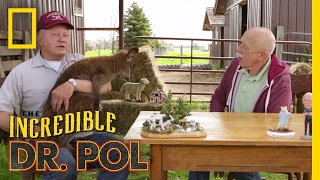 Wallaby Good - Season 4, Episode 8 | Coffee Break with Dr. Pol