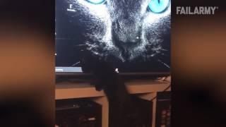 Why I Love Kittens