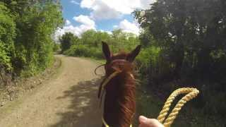 My first time riding a horse...nearly fell off! :(