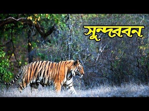 Xxx Mp4 Sundarbans National Park Bengali 3gp Sex