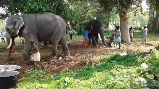"Elephants getting ready for ""KOLLAM POORAM 1"""