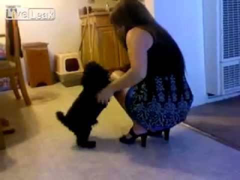 Dog give love to girl at the end!